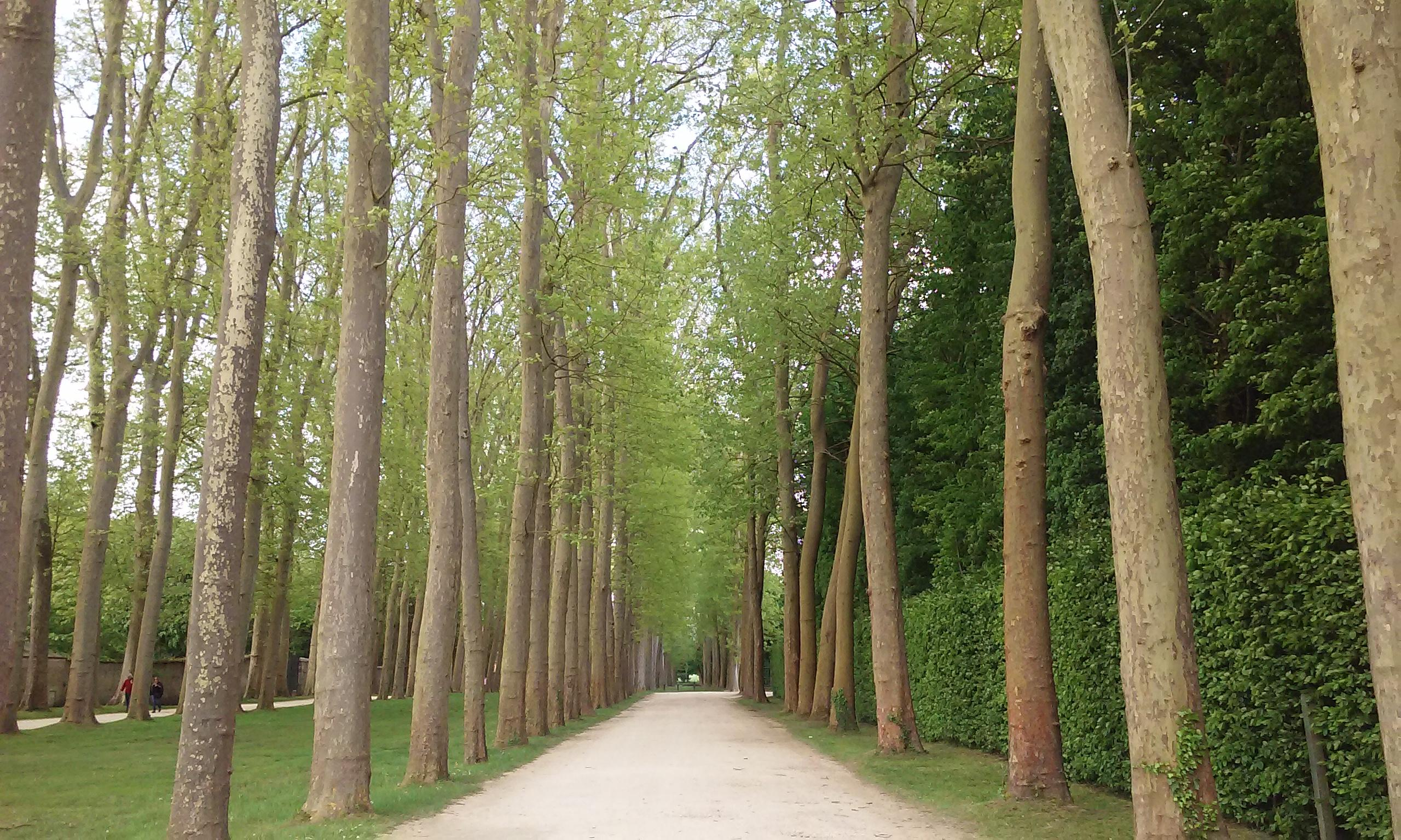 Hallway of trees at Versailles. The gardens have miles of walkways and an entire day can e