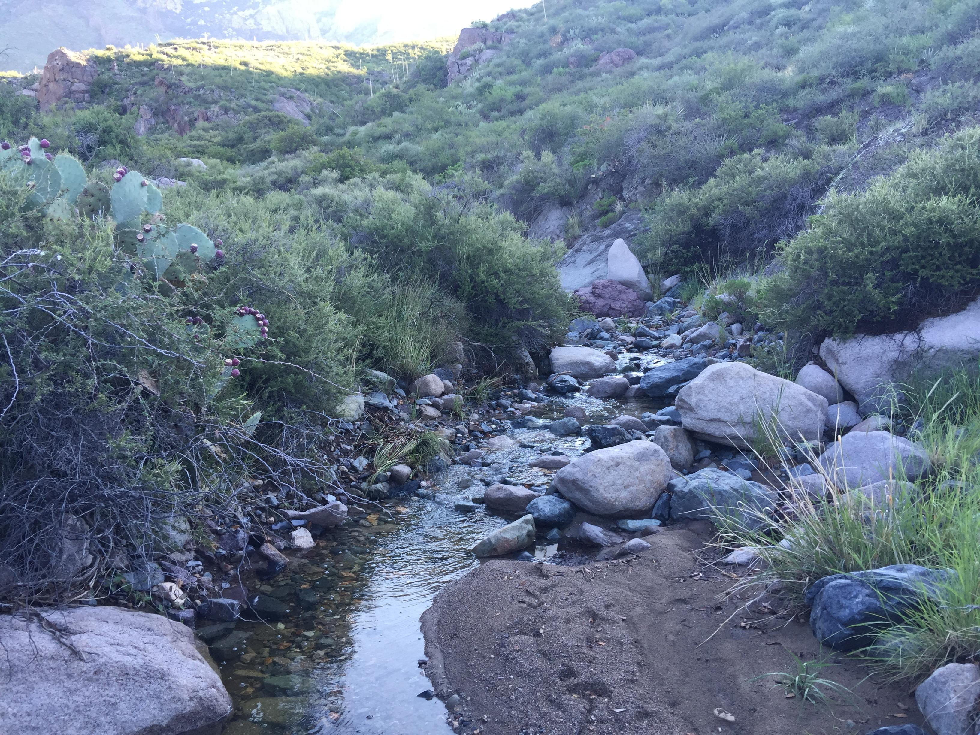OpenNote: La Cueva Trail. This stream leads up to the waterfall in the dessert Las Cruces