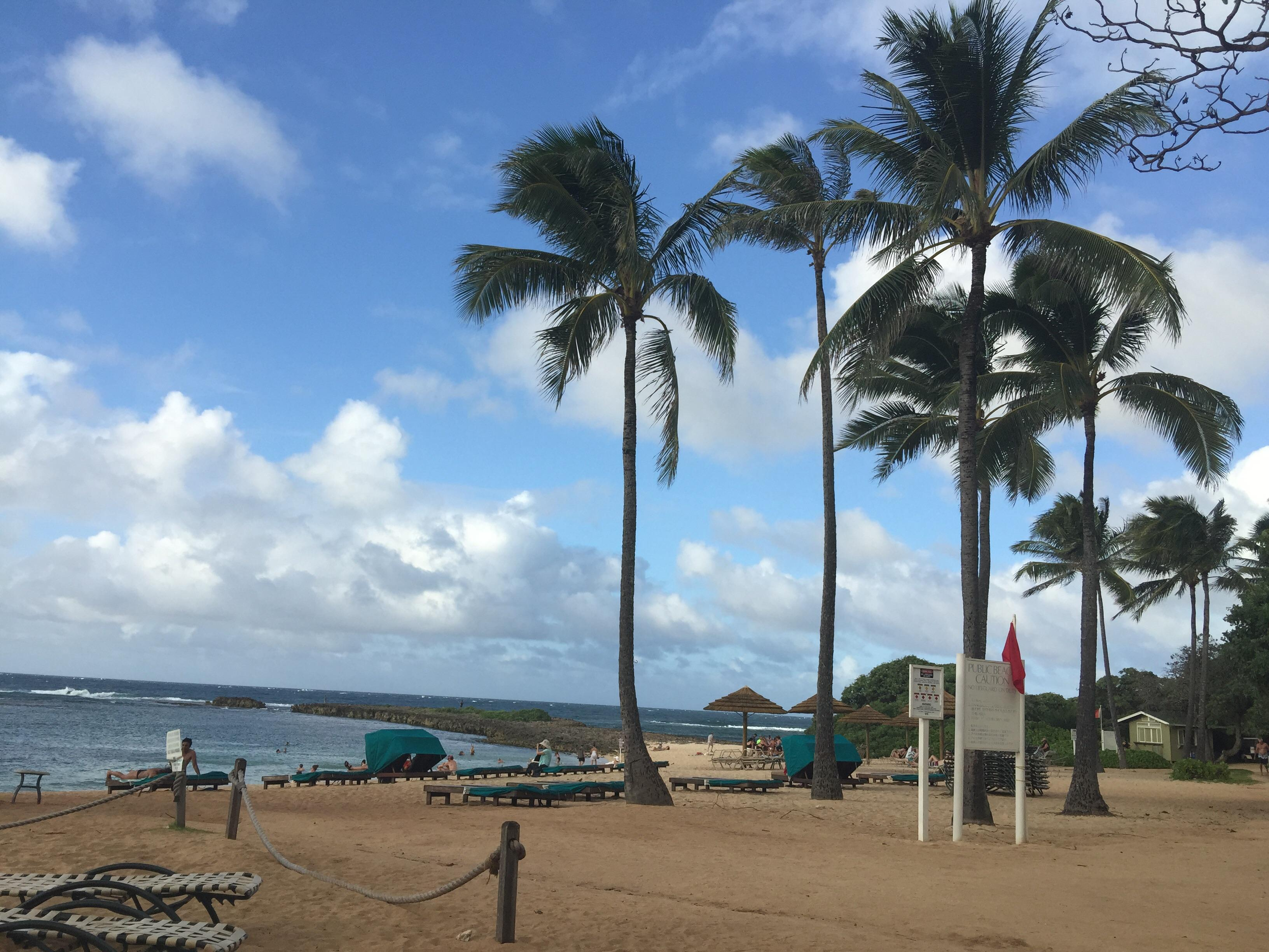 The beach with palm trees at Kuilima Bay near Turtle Bay Hotel