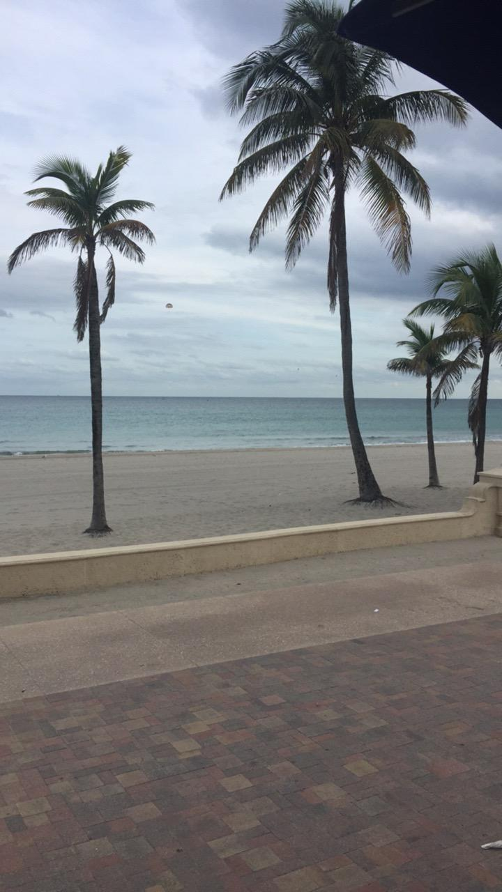 The view from the patio at Oceans 13 Sports Bar and Grill. Palm trees, beach and ocean.