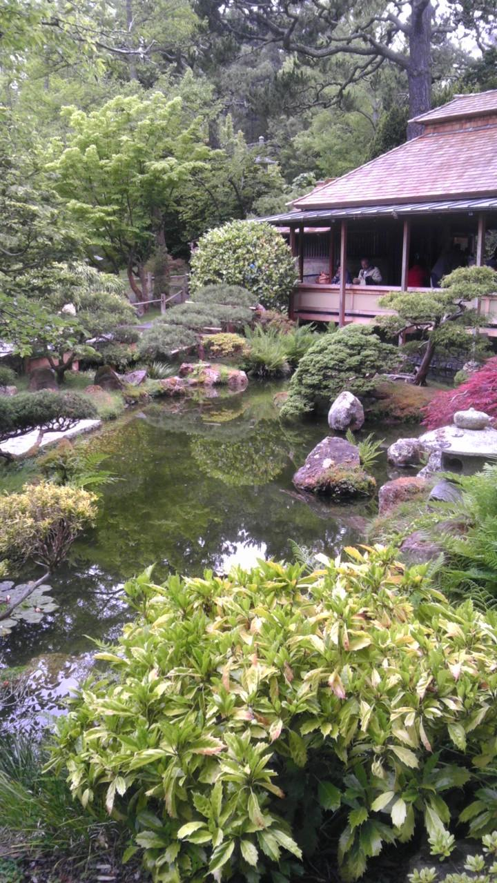 Japanese Tea Garden in San Francisco. The serenity of a small pond and the shrubs around i